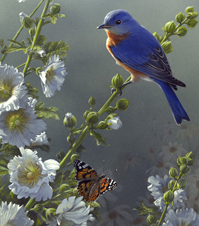 Bluebird and Butterfly  painting detail