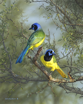 green jays painting