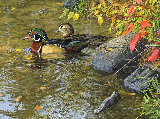 Woodduck painting