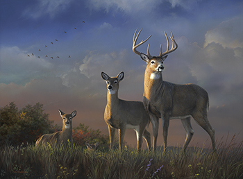 """In the Clear"" whitetail deer"